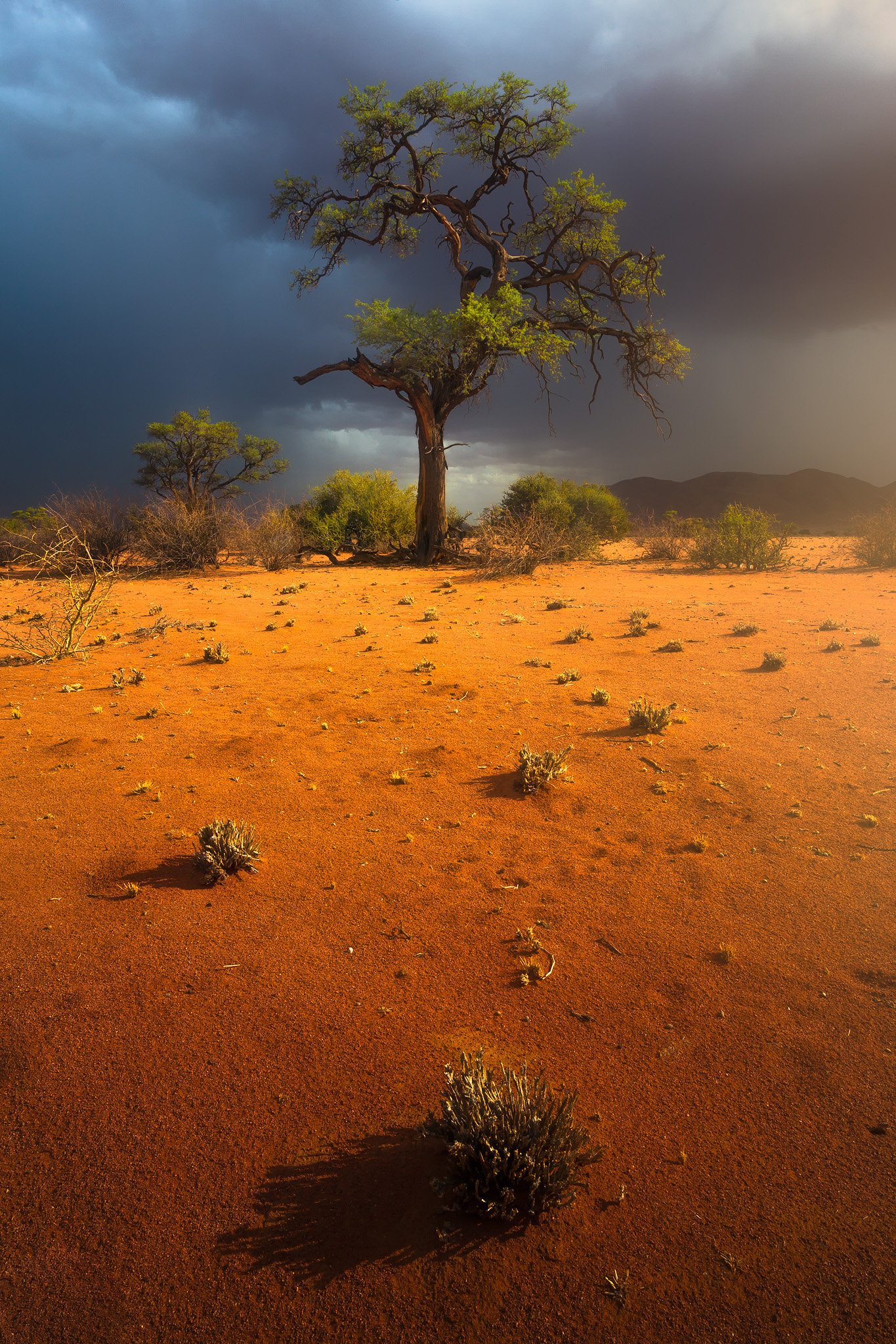 Nowhere to hide - Namibia Africa