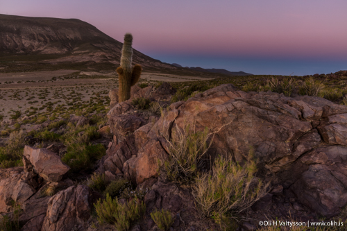 Stones and cactus - Landscape photography tour in Bolivia